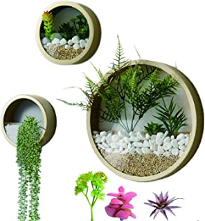 Best vertical plants for containers Reviews