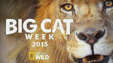 Big Cat Week 2015