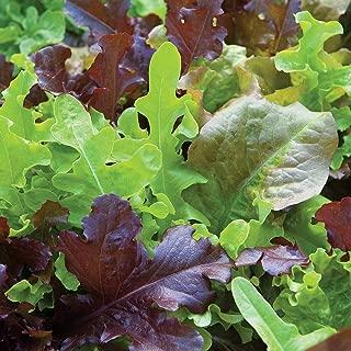 gourmet blend lettuce