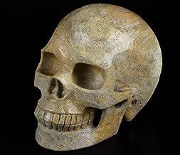 "Skullis 5.0"" Coral Fossil Crystal Skull, Hand Carved Gemstone Fine Art Sculpture, Reiki Healing Stone Statue.741"