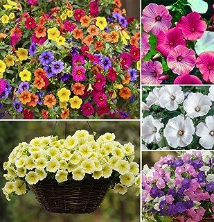 200 PCS Seeds Hanging Petunia Plants Flowers Perennial Home Garden Bonsai NEW Q