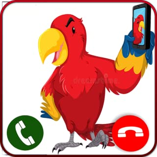 Live Video Talking Parrot Calling Pro 2019