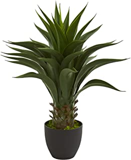 Best green agave plant Reviews