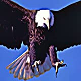 Bald Eagles American Pride Sound Effects