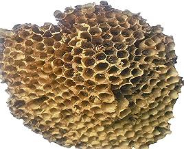 Rich Locks Yellow Bee Nest Tataiya Bhirad Ka Chatta Hairfall Alopecia Treatment