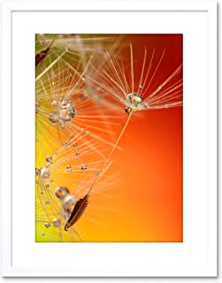 Nature Dandelion Seed Flower Framed Wall Art Print