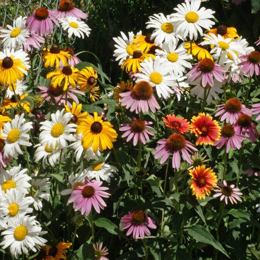 Outsidepride Perennial Wild Flower Seed LB Credence Mix 1 Direct store -