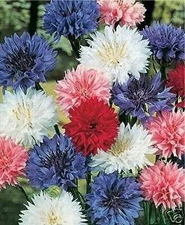 Bachelor Button- Cornflower (Centaurea Cyanus) Mix- 200 seeds
