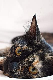 Cat journal: Practical blank lined notebook: Tortoiseshell cat