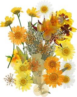 HEALLILY Fleur Pressée Séchée Vraie Fleur Séchée Pétale Fleur Feuilles Bricolage Décor Floral Artisanat Résine Époxy Ongle...