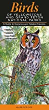 Birds of Yellowstone & Grand Teton National Parks: A Guide to Common & Notable Species