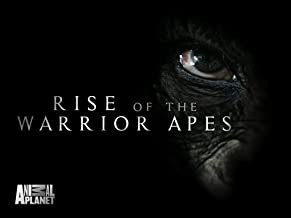 Best rise of a warrior Reviews