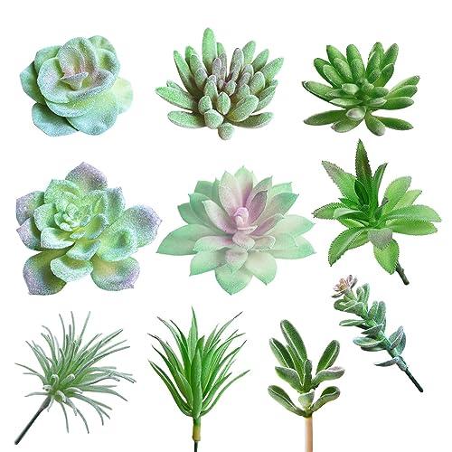 Types Of Succulent Amazon Com