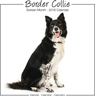Border Collie Calendar - 2016 Wall calendars - Dog Calendars - Monthly Wall Calendar by Avonside Studio