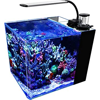 GankPike 8-Gallon Saltwater Aquarium Marine Fish Tank Reef Tank with Lid, Protein Skimmer, LED Light, Heater, LCD Digital Thermometer and Pump