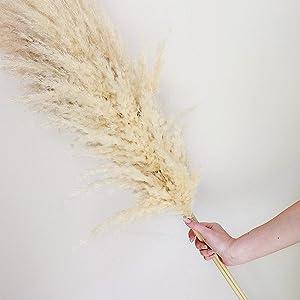 DECOR CLOUD Large Pampas Grass Flower Decor 3 Stem Bundle 48'' (4FT) Length 100% Natural Fluffy Tall Dried Pampas Plant Decor for Rustic Interior Design Boho Home Décor Wedding Decor Arrangements