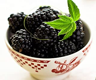 Best everbearing black raspberries Reviews