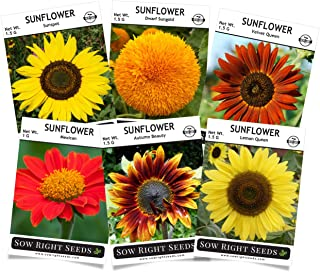 Sow Right Seeds - Sunflower Seed Collection for Planting, Includes six Varieties: Autumn Beauty, Dwarf Sungold, Lemon Queen, Velvet Queen, Sunspot, and Mexican Sunflower Seeds, Non-GMO Heirloom Seed.