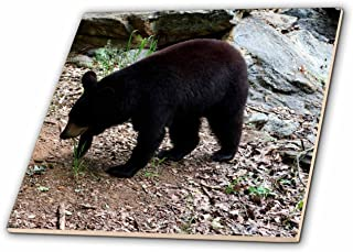 3dRose ct_63336_4 A Black Bear in a Wildlife Center Ceramic Tile, 12-Inch