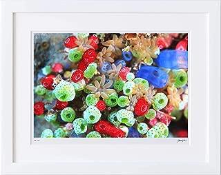 【写真工房アートフォト 額装写真】 ホヤとサンゴ/コモド島/インドネシア(ホワイト 大判サイズ 557mm×442mm)