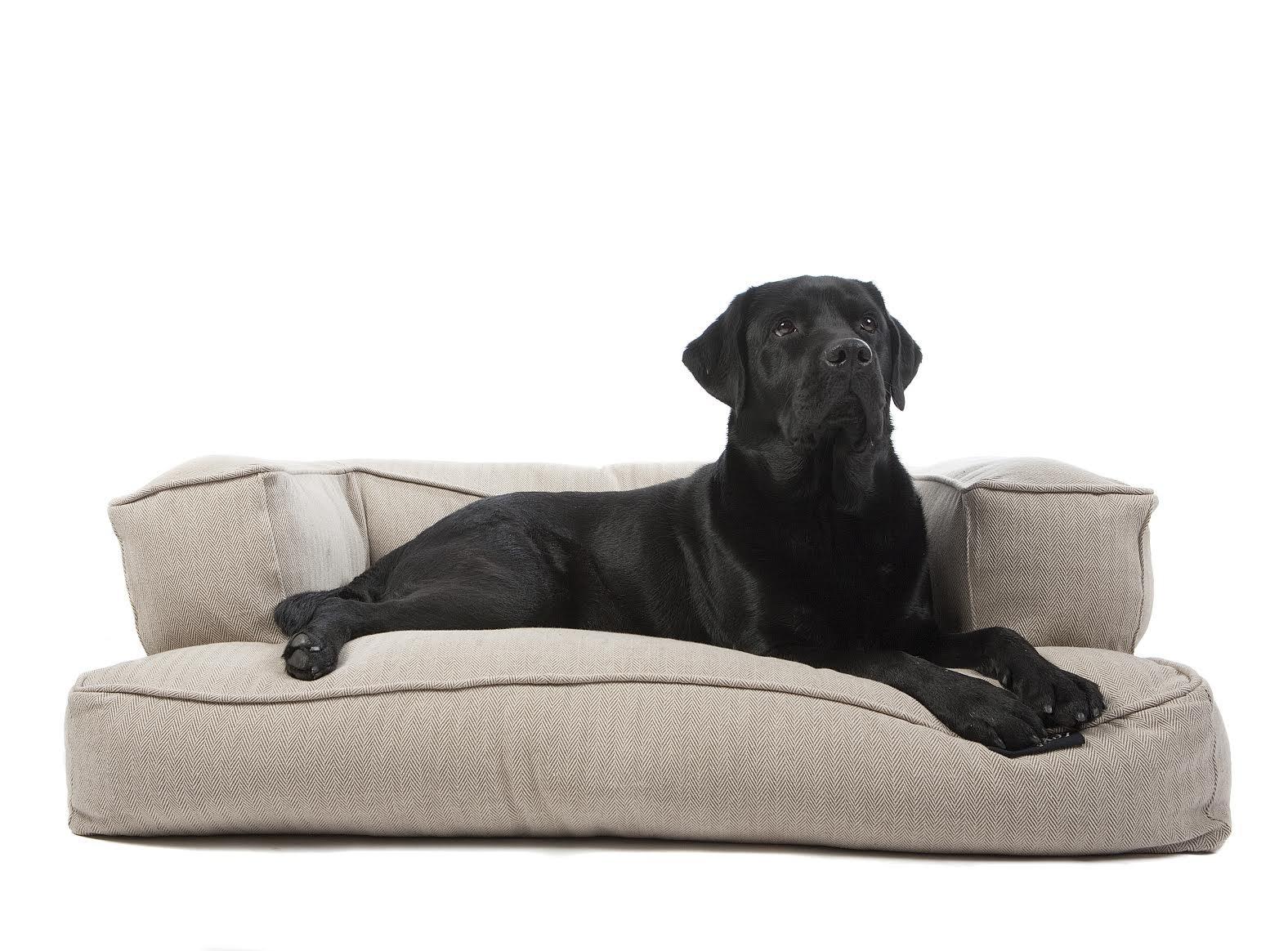 Sofa Pera Perro LEX&MAX DOGSOFA Boutique 115X75X35: Amazon.es: Productos para mascotas