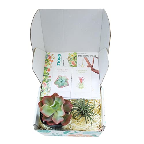 Succulent Subscription Boxes - 1 Succulent +1 Airplant/Month