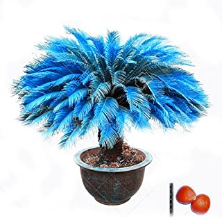 Best potted sago palm Reviews