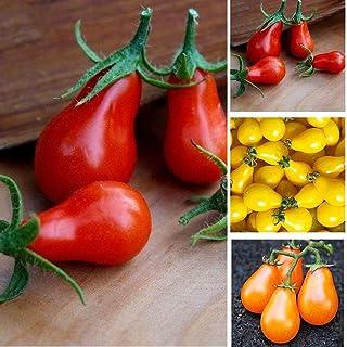 fe24dd9d0969a Cioler Seed House - 100 pièces Graines de tomates poires biologiques Graines  de tomates cerises rares