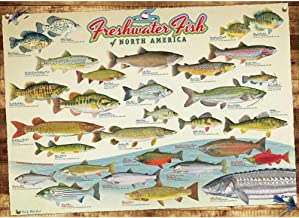 Cobble Hill Freshwater Fish of North America Puzzle (1000 Piece)