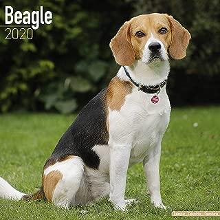 Beagle Calendar 2020 - Dog Breed Calendar - Wall Calendar 2019-2020