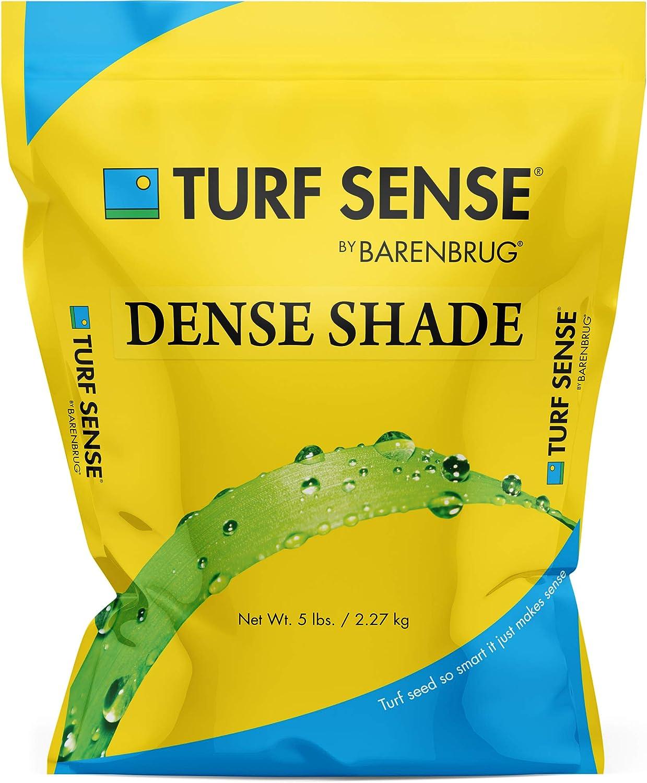 Barenbrug Dedication 25621 Turf Sense Grass Cheap SALE Start Seed-Grows Sh Areas Dense in of