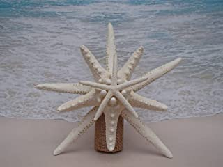 natural starfish for sale