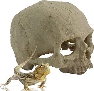 TinaWood Resin Emulational Human Skull Halloween Decoration Aquarium Terrarium Decor Perfect Hide for Reptile Tank Lizard Gecko (Human Skull)