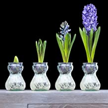 Van Zyverden Hyacinth Kit Blue With Clear Artisan Glass