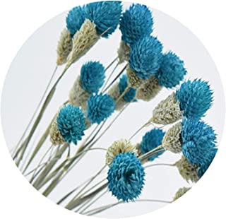 Solardragon 15pcs Purple Natural Flower Bouquets Dried Bouquets Wild Strawberry Fruit Bouquets-in Artificial & Dried Flowers from Home & Garden,Blue