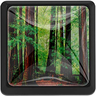 Redwood Trees Northwest Rain Forest Tropical Scenic Wild Nature Lush Branch Cabinet Knobs Glass Drawer Knobs Handles Pulls 3