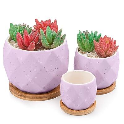 HOMENOTE 4.72/3.54/2.56 inch Purple Succulents ...
