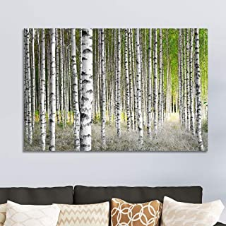 wall26 Canvas Prints Wall Art - Birch Trees in Bright Sunshine in Late Summer | Modern Wall Decor/Home Decoration Stretched Gallery Canvas Wrap Giclee Print. Ready to Hang - 24