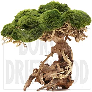Bonsai Driftwood Aquarium Tree NA (6 Inch Height) Natural, Handcrafted Fish Tank Decoration | Helps Balance Water pH Levels, Stabilizes Environments