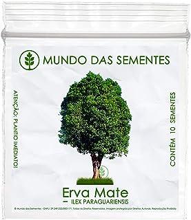 10 Sementes de Erva Mate - Ilex Paraguariensis