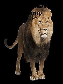 Lions Behaving Badly