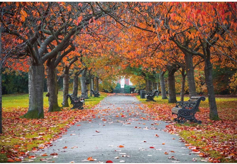 DaShan 6x4ft Polyester Fall Forest Path Backdrop Fall Wedding Autumn Foliage Party Autumn Park Scene Fallen Leaves Photography Background Birthday Party Fall Theme Party Outdoor Travel Photo Props