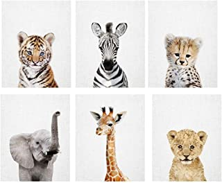 Amy Peterson Baby Safari Animal Portraits - Set of 6 Unframed Prints (8x10 Inch)