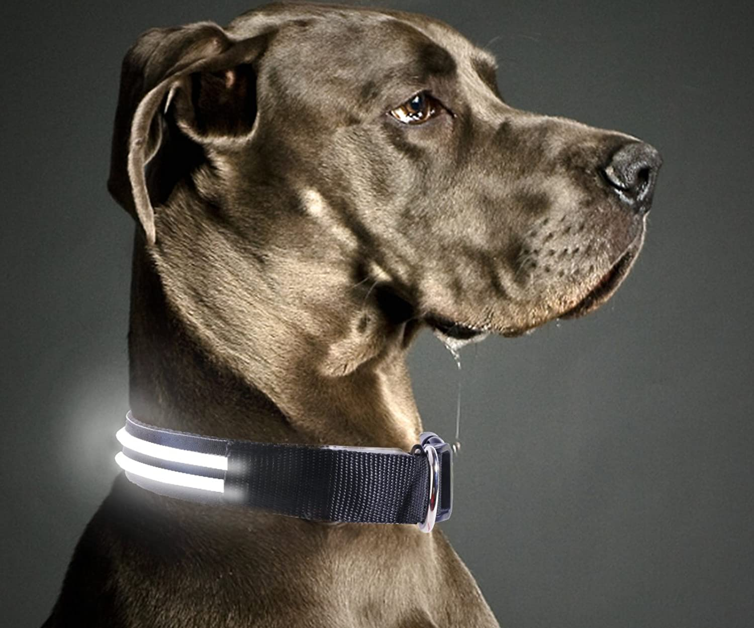 Hot pet Dual Line Safety LED Dog Collar  USB Rechargeable with Water Resistant Flashing Light  Vailable in 7 colors & 3 Sizes (Medium [1519  4050 cm], Black)