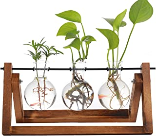 Iwtmm Office Plant Terrarium with Wooden Stand, Desktop Glass Planter Bulb Vase, Solid Air Retro Accessories for Hydroponi...