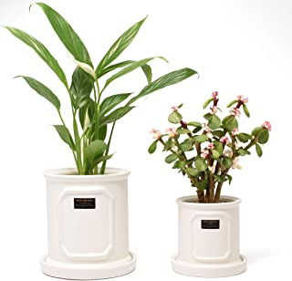 Ceramic Plant pots, 5 Inch Planter Indoor&Outdoor, Cylinder White Flower Pot Set of 2 with Drainage/Pottery Tray/Gardening Tools