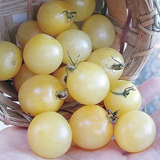 snow white cherry tomato plant