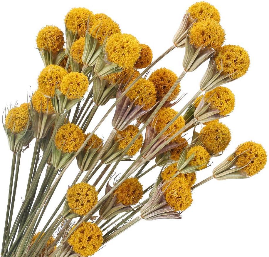 XHXSTORE 20pcs Flores Secas Gypsophila Amarillo Ramo de Flores Naturales Otoño para Decoración Ramo de Boda Mesa Manualidades Fiesta Navidad Otoño Hogar