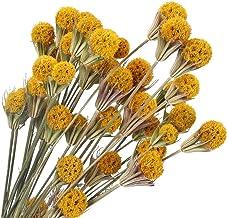 XHXSTORE 2Pcs Dried Flowers Bouquet Natural Dried Pine Cones Dried Real Natural Flowers Dried Bundles Artificial Handmade ...