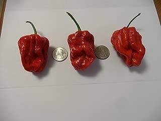 7 Pot Gigantic SR Pepper 10+ Seeds